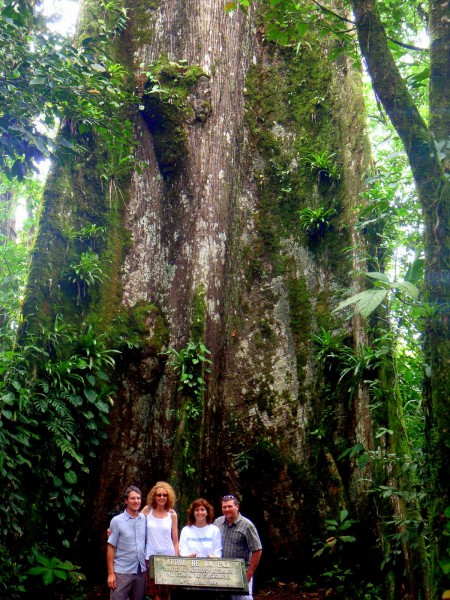 That's a tree behind us - just one tree. Arbol de la Paz on the edge of Tenorio National Park Costa Rica