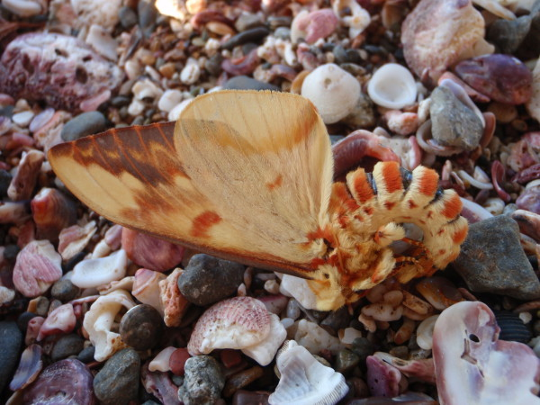 moth and seashells