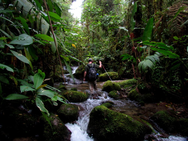 In Amistad Peace Park the streams are often the only trail through the rainforest