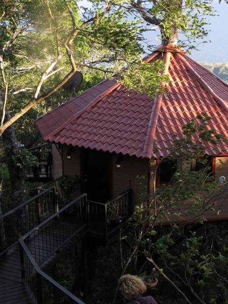Tree house Tarrazú