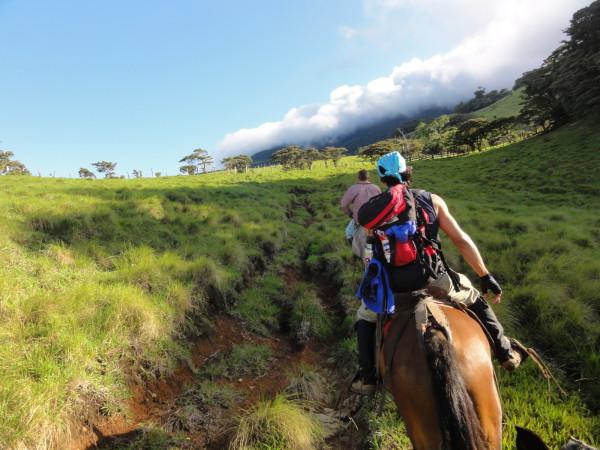 Horses on Tenorio volcano