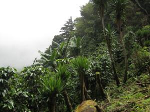 Steep hillside on the coffee Finca Rio Jorcó