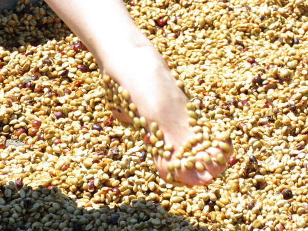 Coffee bean pedicure