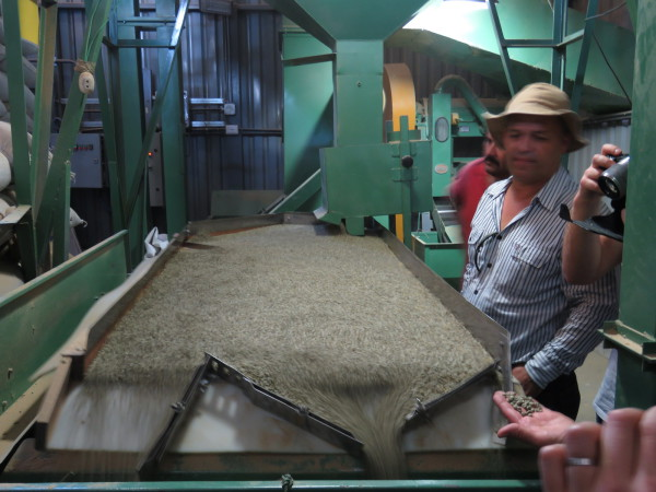 The final step before bagging the green coffee is the shaker table. The dried green beans are passed over the vibrating table that has a slight tilt and tiny ridges to push smaller low quality beans to the left and allow the premium coffee to pass on the right