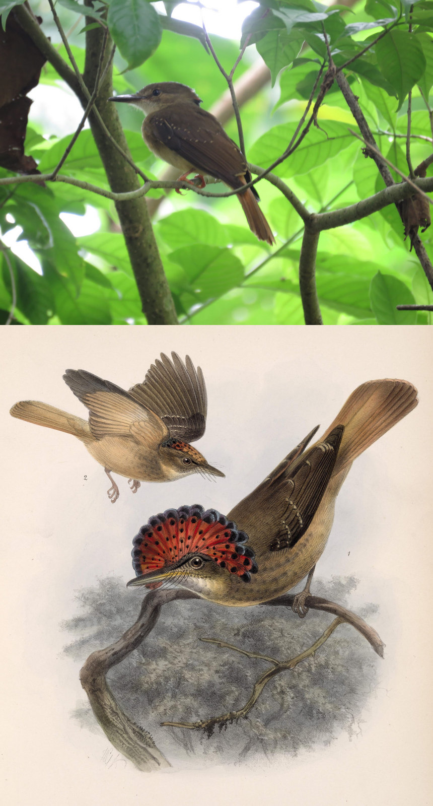 Photos of Carara National Park Costa Rica