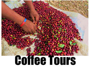 Coffee growning, picking and processing tours in Costa Rica