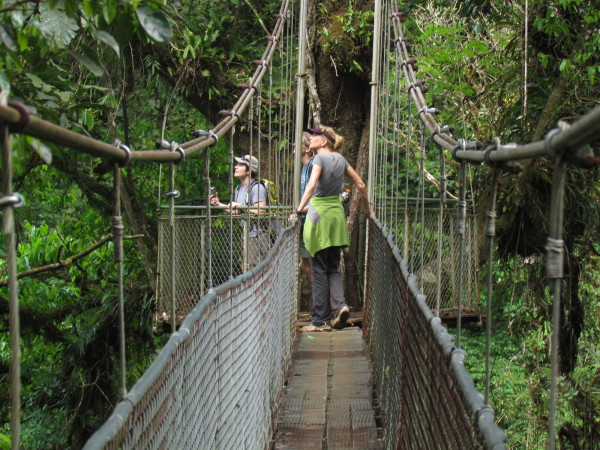 Double canopy suspension bridge