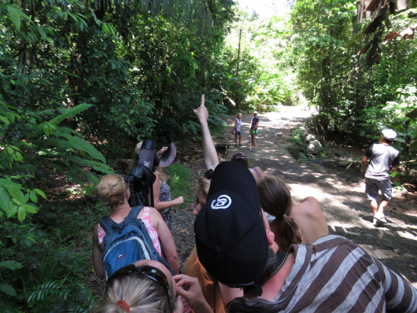 Both species of sloths at once on a wildlife watching walk in Manuel Antonio