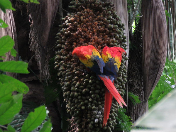 How to See Macaws in Costa Rica