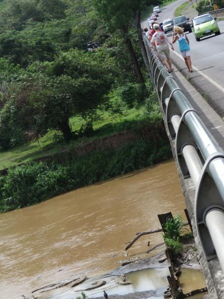 Crocodile bridge over the Tarcoles river Costa Rica