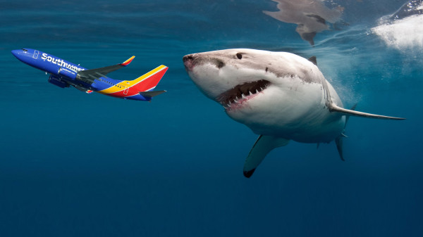 Shark Eating Airplane
