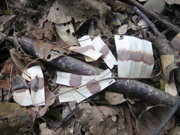 Band-aid seeds