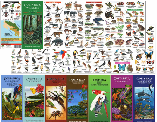Rainforest Publications Wildlife Laminate
