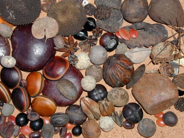 hundreds of tropical rinforest seeds