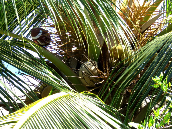 Football & basketball in a coconut palm