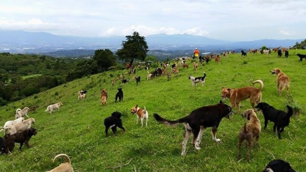 Dog Hike at Territorio Zaguates