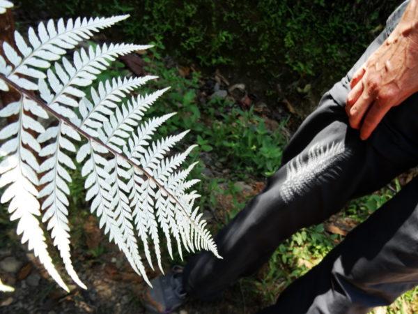 The tatoo fern
