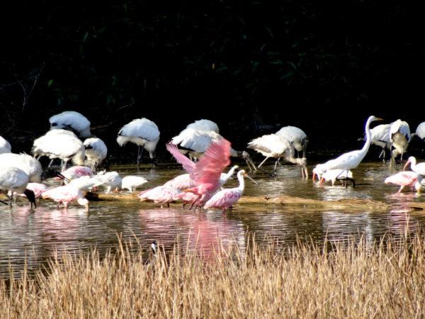 wading bird pond