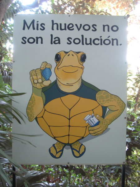 Turtle's eggs are not the solution