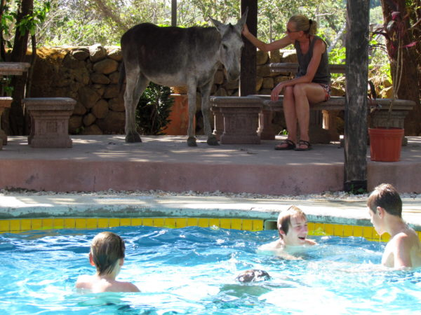 Donkey swimming pool
