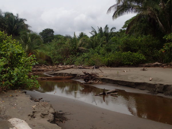 Estero Roto Rio Tusubres