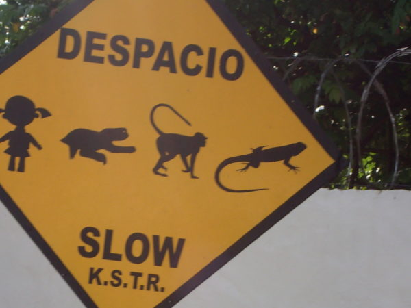 Despacio - Iguana, Monkey, Sloth and Power Puff Girl crossing - Slow
