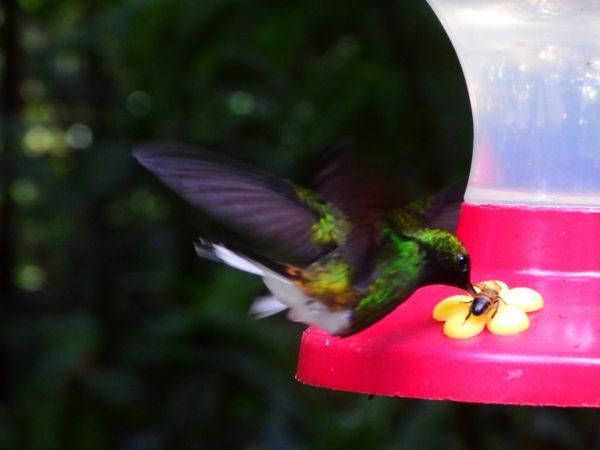 bee and hummingbird