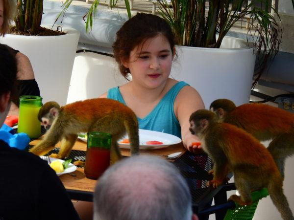 Monkeys at Breakfast Table