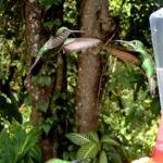 Bird Feeder Ban