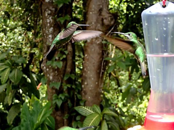 Humming bird feeder